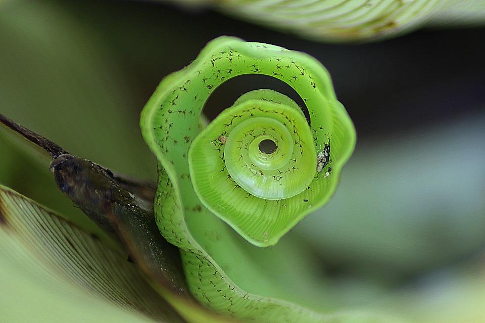 Leaf, Roll, Nature, Plant, Natural, Botanical, Organic