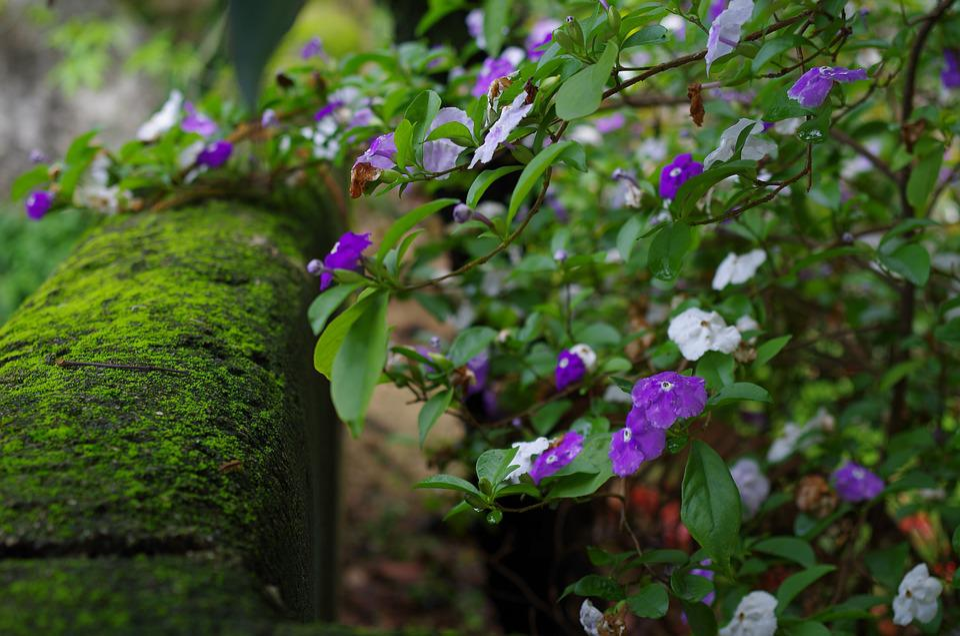 Flower, Plant, Nature, Garden, Leaf