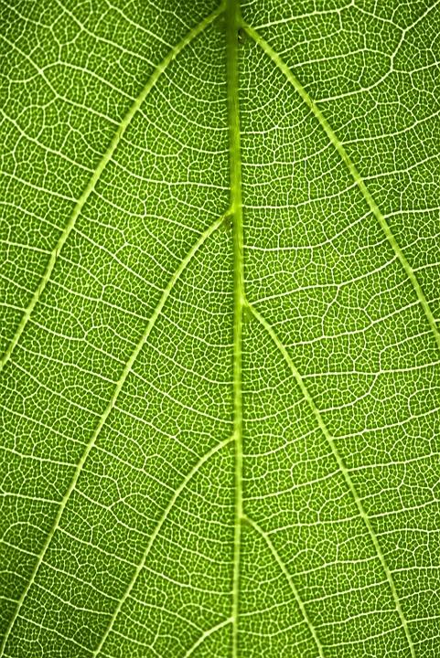 Green, Leaf, Leaves, Nature, Plant, Summer, Spring