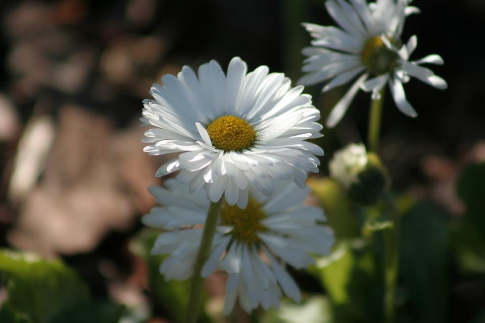 Nature, Flower, Plant, Leaf, Summer