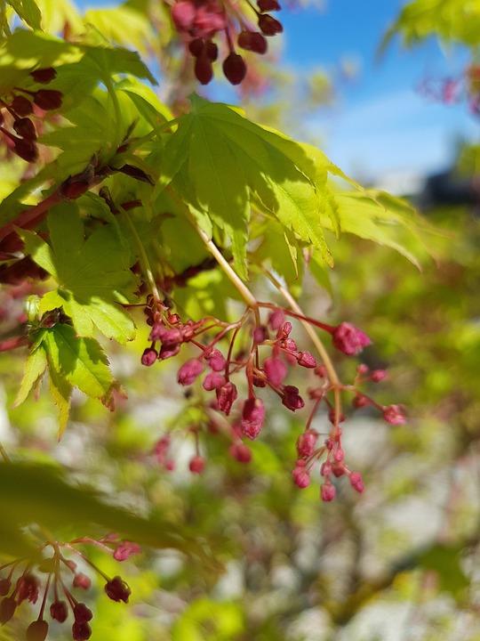 Leaf, Plant, Nature, Tree