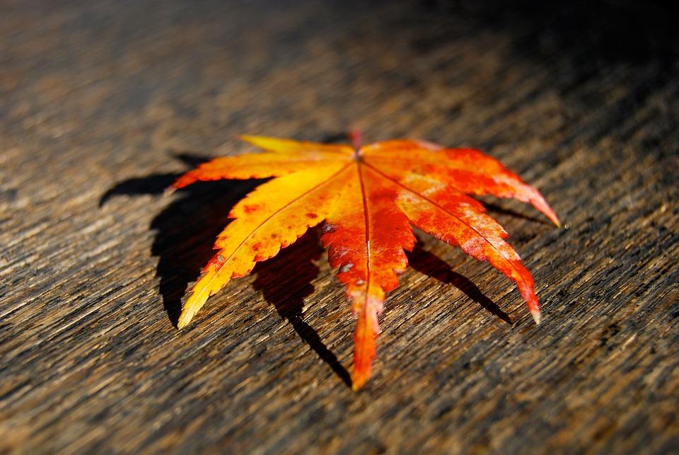 Leaf, Fall, Autumn, Fall Leaves, Season, Orange, Nature