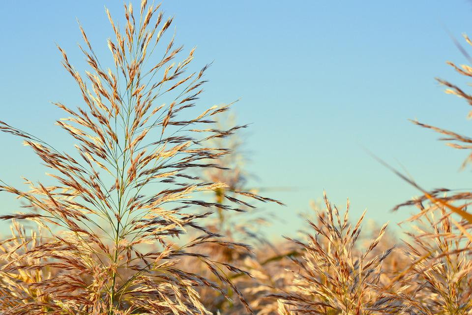 Nature, Summer, Plant, Lawn, Field, Sky, Outdoor, Leaf