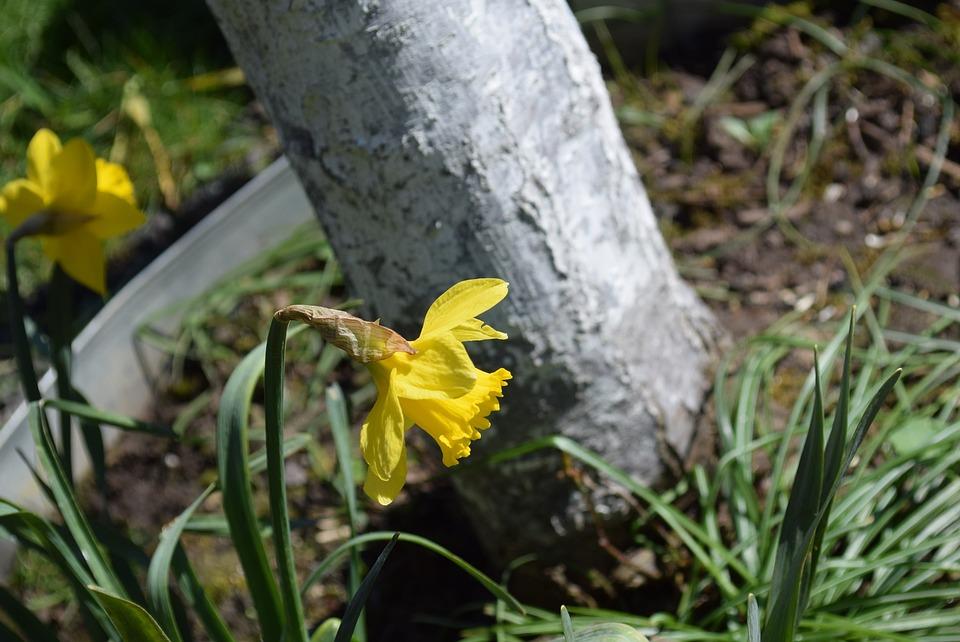 Flower, Nature, Flora, Leaf, Outdoors