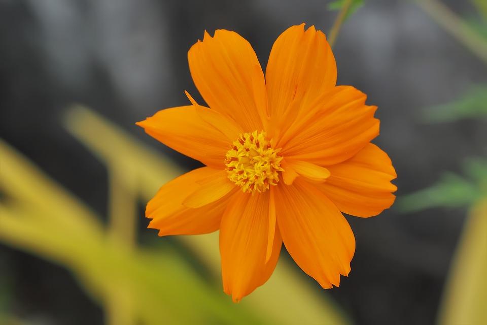 Nature, Flower, Flora, Summer, Leaf, Outdoors, Garden