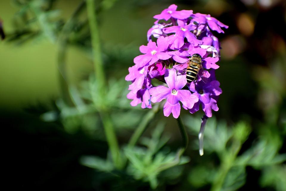 Flower, Flora, Nature, Garden, Petal, Leaf, Outdoors