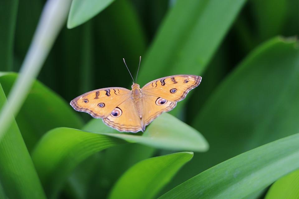 Butterfly, Nature, Insect, Outdoors, Summer, Leaf