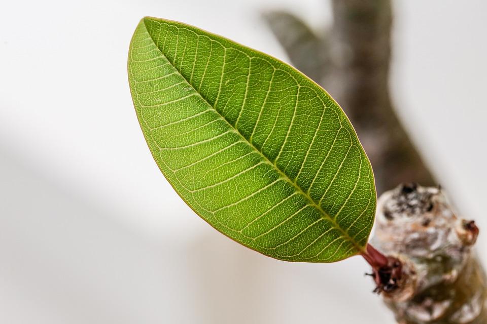 Leaf, Green, Plant, Patterns, Botany, Macro