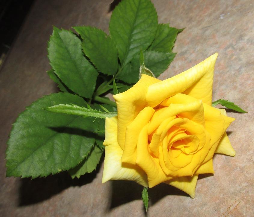 Flower, Leaf, Nature, Flora, Petal