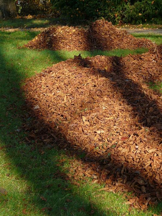 Leaves, Leaf Piles, Park, Autumn, Meadow, Shadow, Light