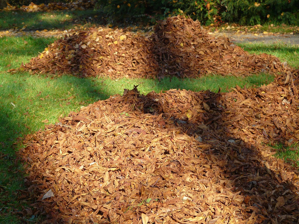 Leaves, Leaf Piles, Park, Autumn, Meadow, Shadow, Light