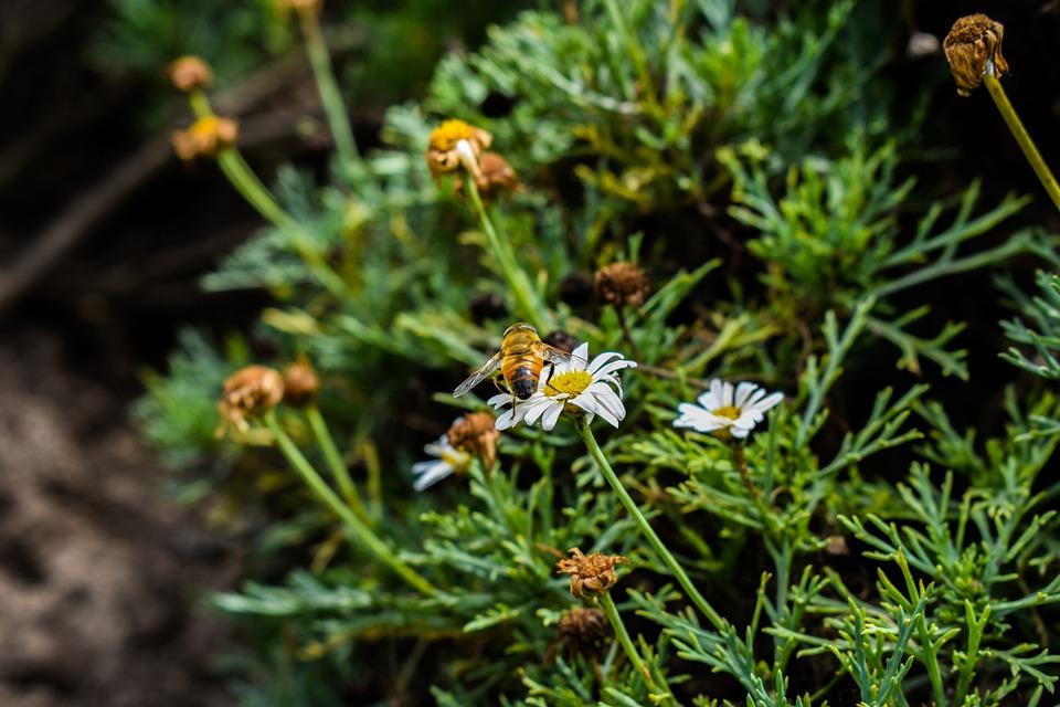 Bee, Nature, Flower, Plant, Leaf
