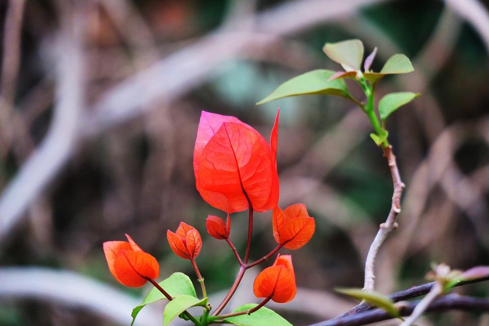 Nature, Leaf, Plant, Flower, Outdoor, Garden, Flower's