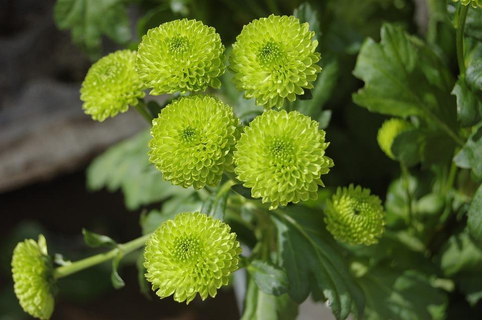 Nature, Plant, Leaf, Flower, Santini, Flowers
