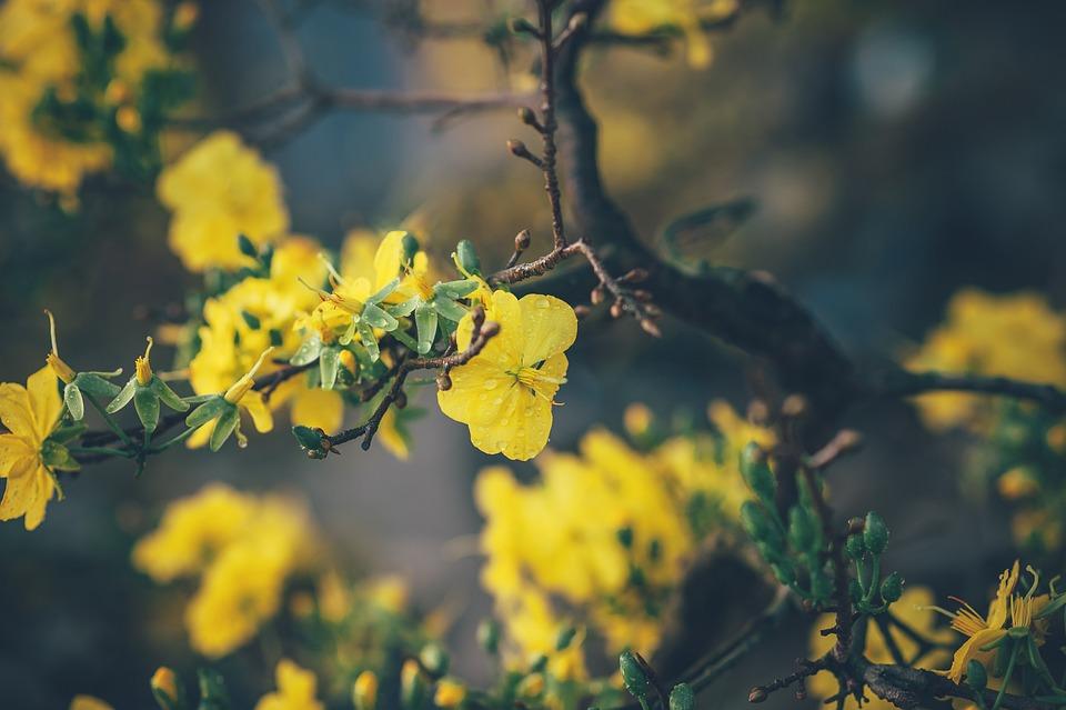 Flower, Leaf, Floral, Nature, Rose, Garden, Plant