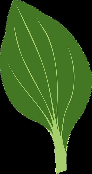 Green, Herb, Leaf, Plant