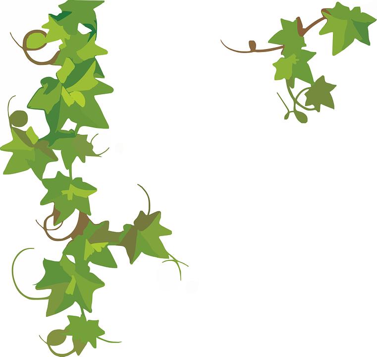 Ivy, Plant, Green, Nature, Leaf, Decoration, Foliage