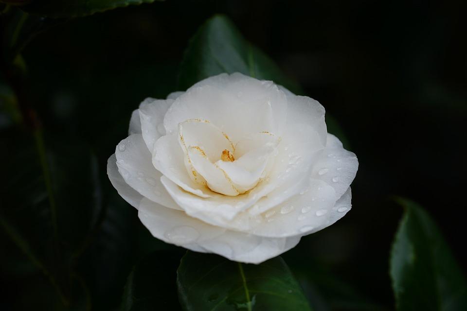 Flower, Plant, Leaf, Nature, Petal, Petals