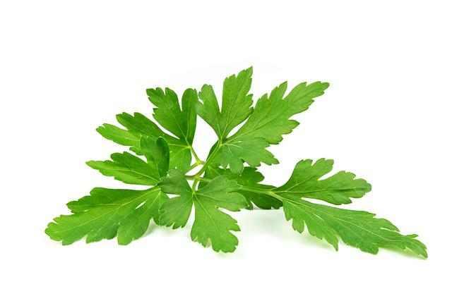 Parsley Leaves, Leaf, Parsley Common, Aromatic, Plant