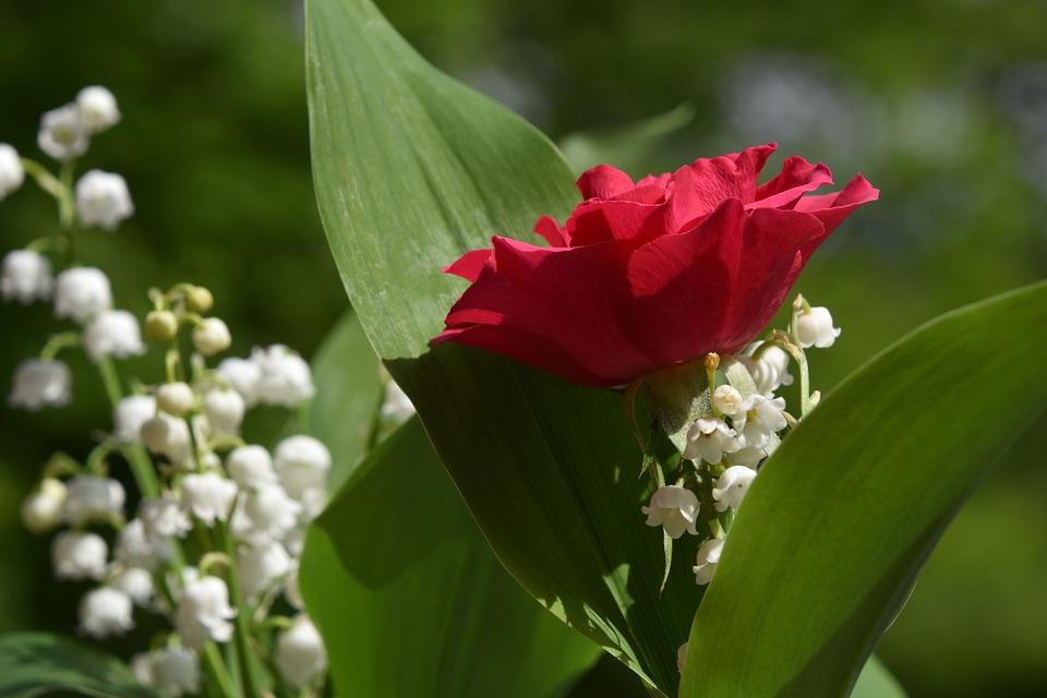 Nature, Flower, Plant, Leaf, Floral, Thrush, Pink