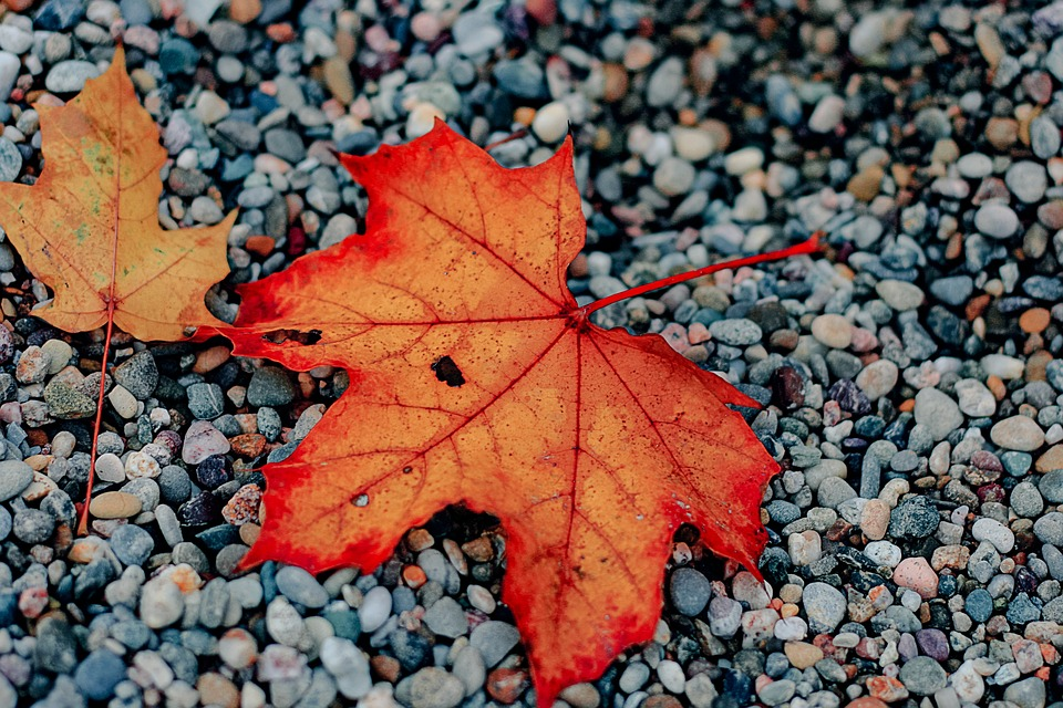 Leaf, Autumn, Fall, Season, Red, Orange, Leaves, Colors