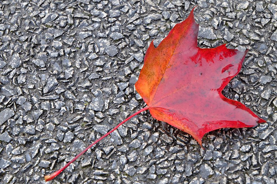 Leaf, Autumn, Leaves, Red, Ground, Rain