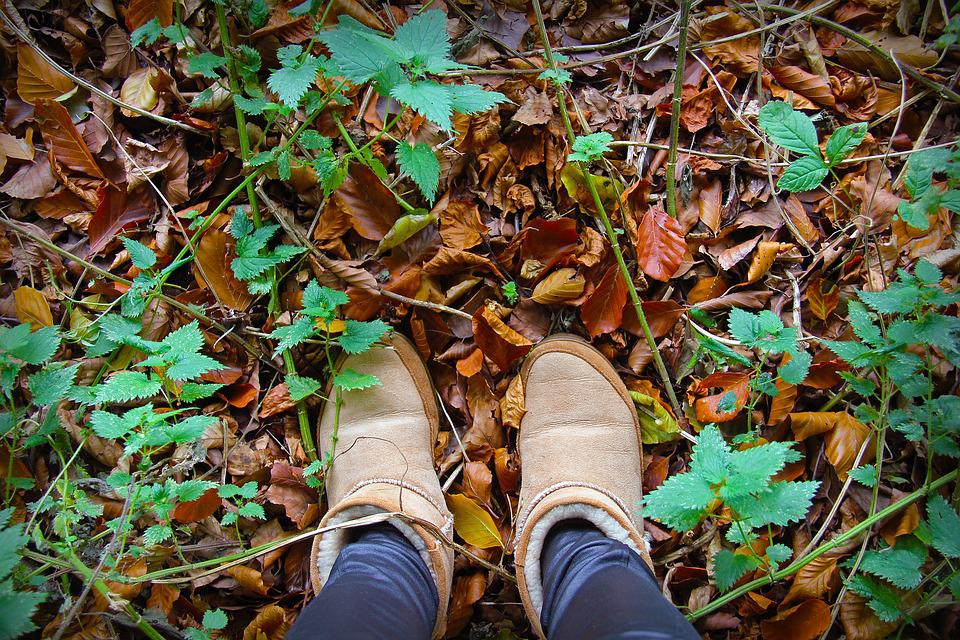 Leaf, Fall, Wood, Nature, Outdoors, Shoe, Boots