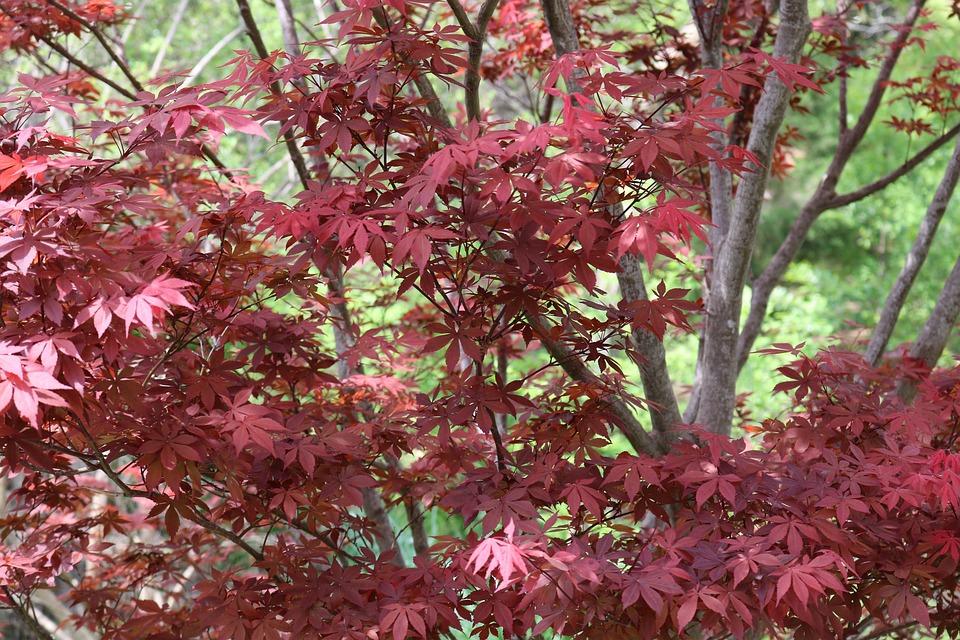 Leaf, Nature, Season, Tree, Flora, Outdoors, Shrub
