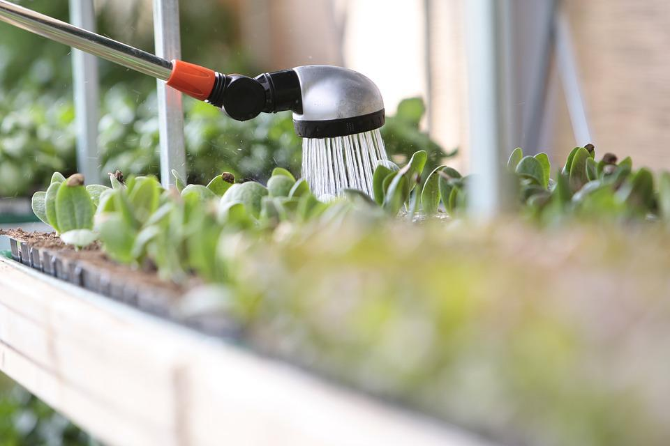 Watering, Water, Plant, Leaf, Leaves, Green, Summer