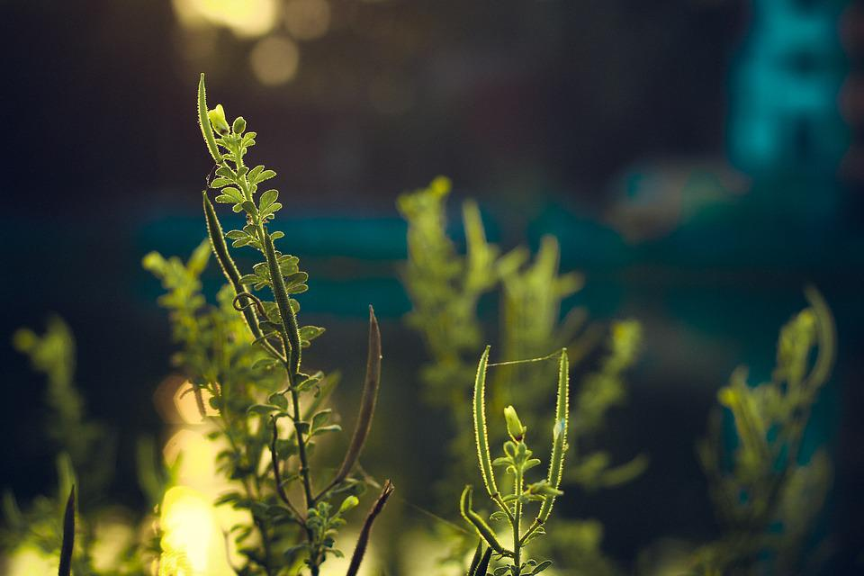 Green, Plant, Leaf, Foliage, Nature, Summer, Abstract