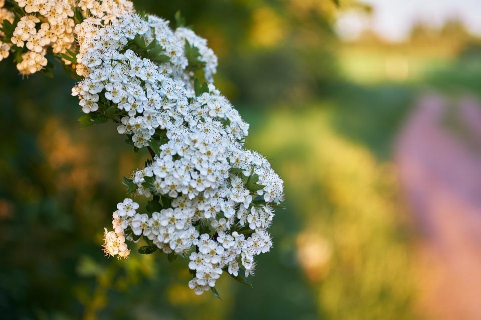 Flower, Nature, Plant, Season, Summer, Tree, Leaf