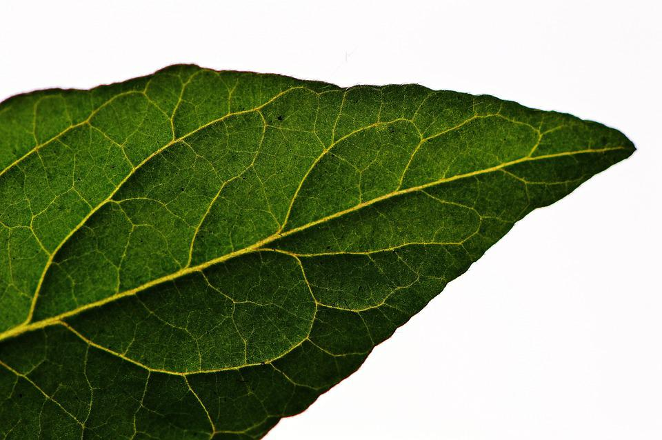 Leaf, Tomato, Green, Vegetables, Macro, Close, Nature
