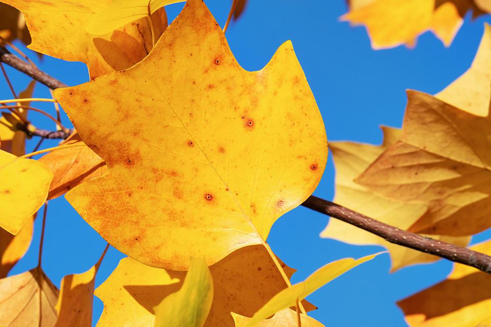 Autumn, Leaf, Yellow, Autumn Colours, Mood, Tree