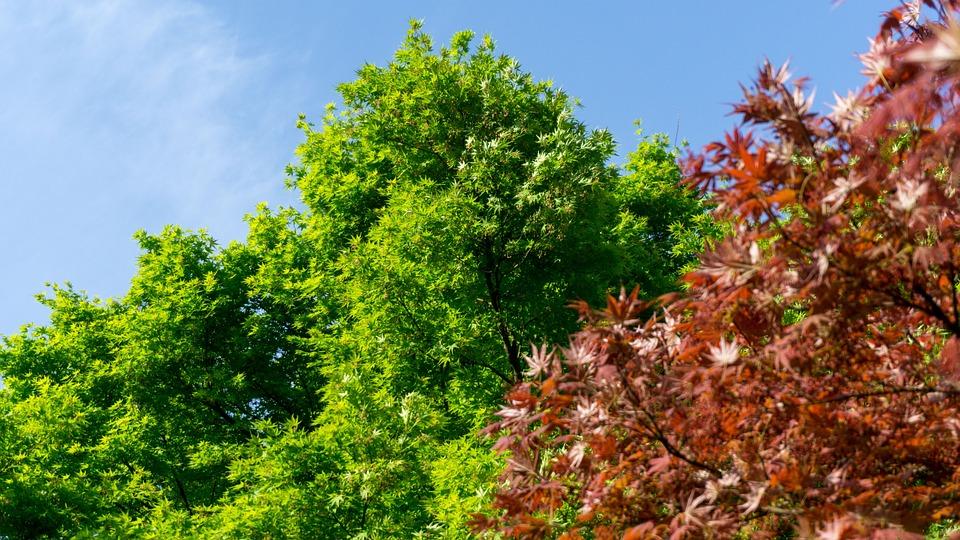 Green, Nature, Tree, Leaf, Park