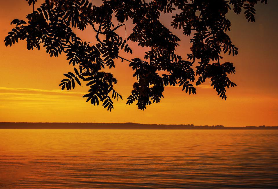 Sunset, Water, Lake, Branch, Leaf, Tree, Horizon