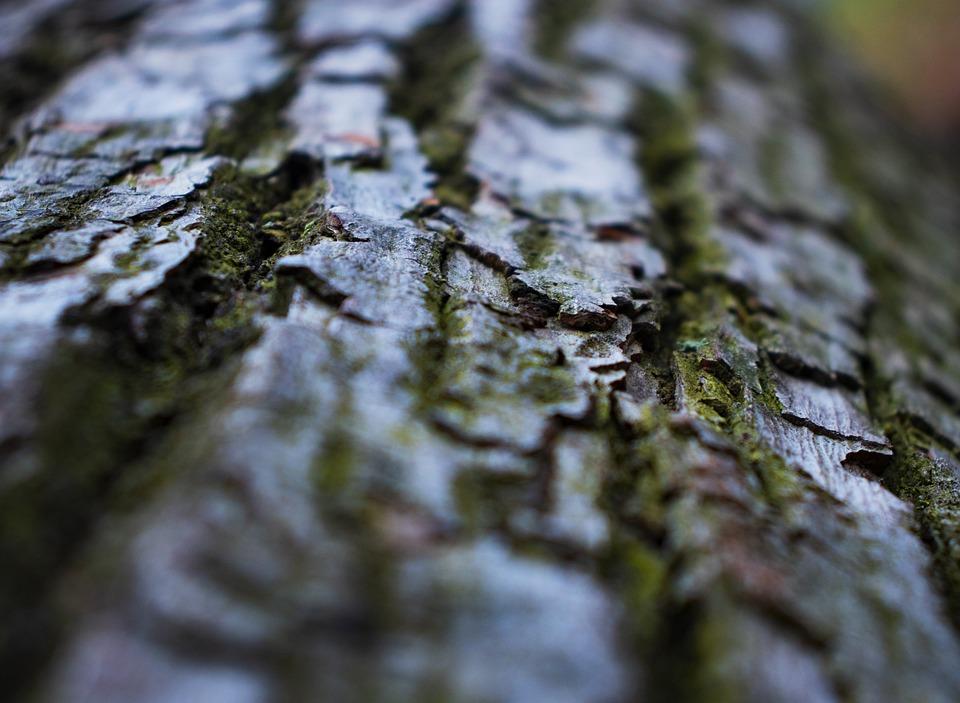 Moss, Tree, Plant, Leaf, Vegetation, Texture, Trunk