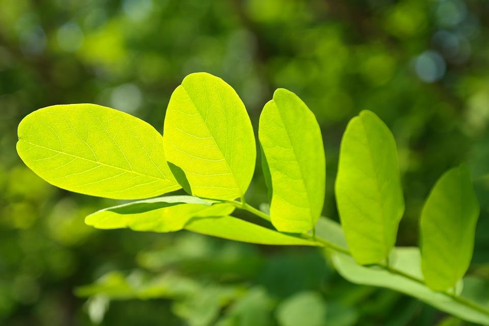 Leaves, Branch, Tree, Leaf Veins, Deciduous Tree