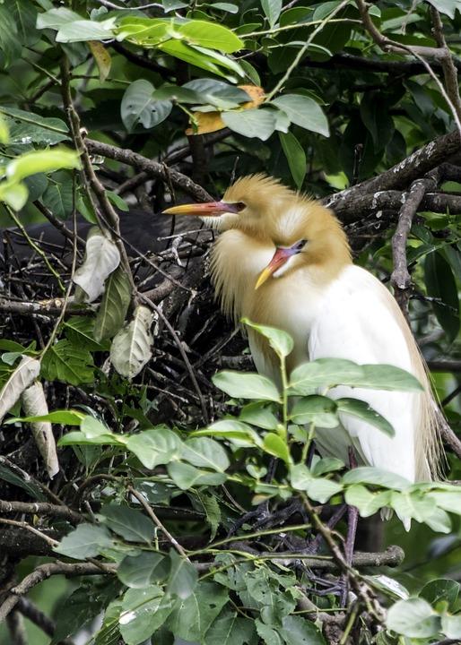 Nature, Bird, Outdoors, Wildlife, Animal, Leaf, Tree
