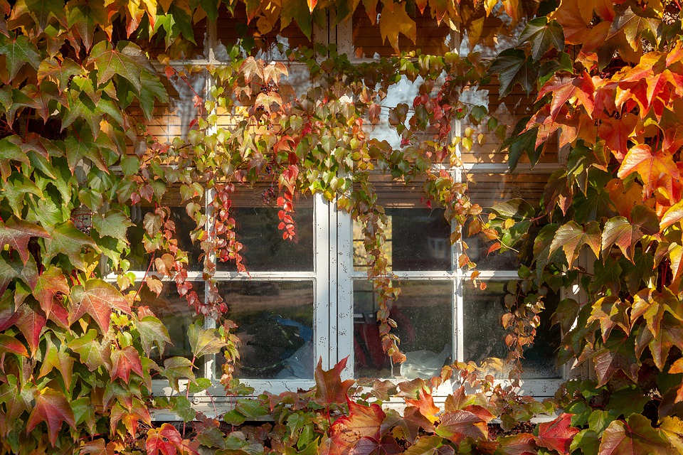 Window, Leaf, Autumn, Yellow, Red, Nature