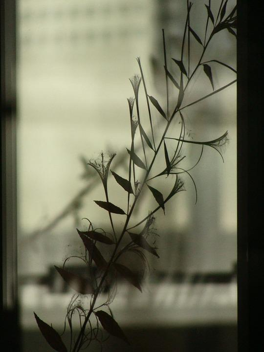 Leaf, Shadow, Window, Transparent