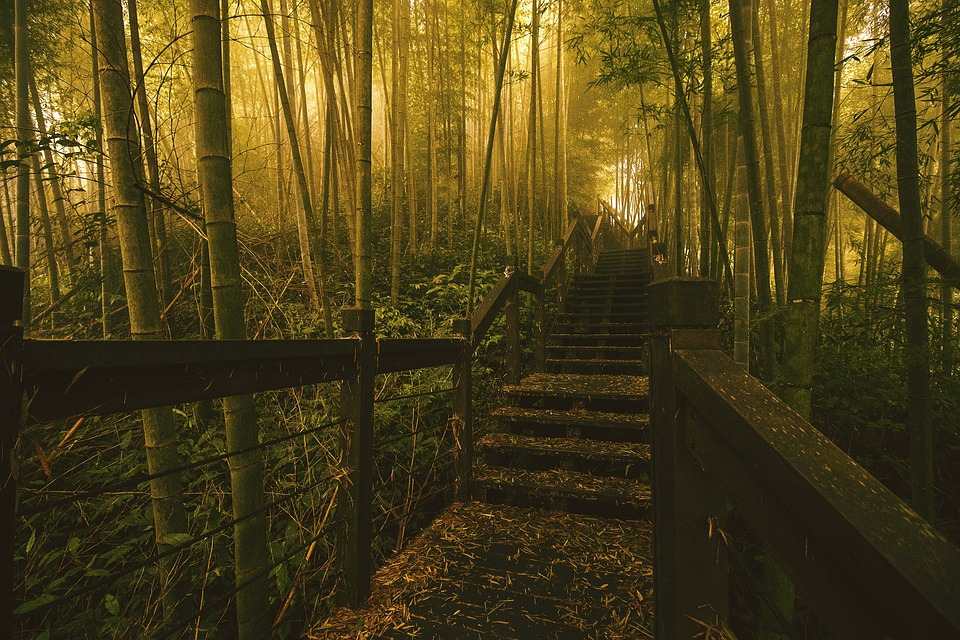 Wood, Tree, Dawn, Path, Leaf, Light, Nature, Outdoor