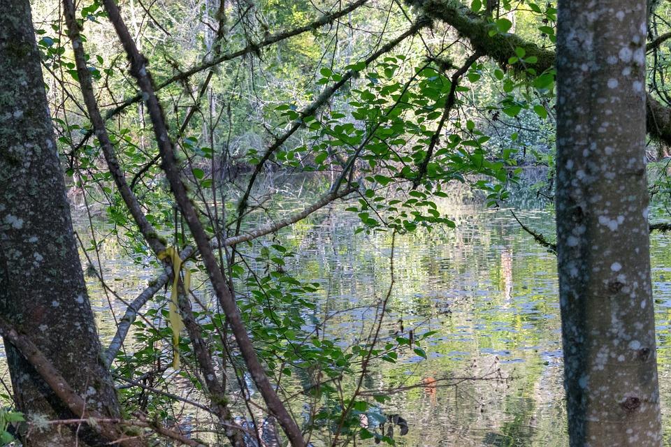 Tree, Wood, Nature, Landscape, Leaf, Seattle, Forest