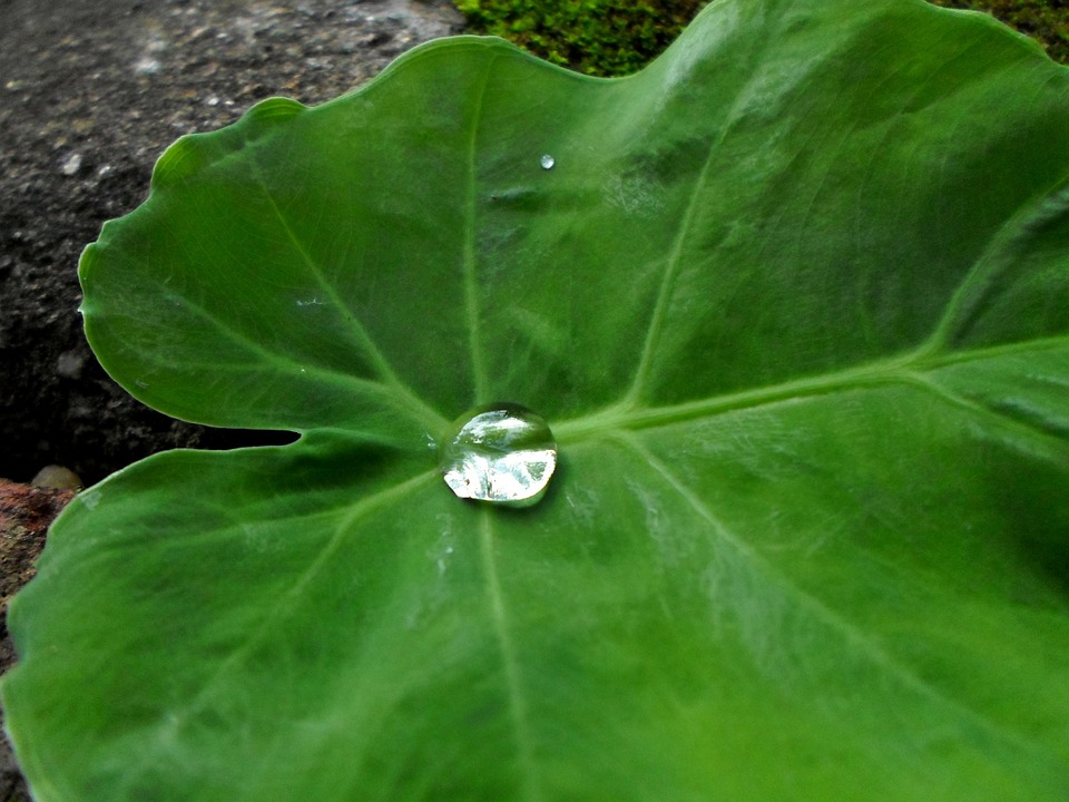 Water, Drops, Leaves, Greens, Leafy, Greenery, Macro