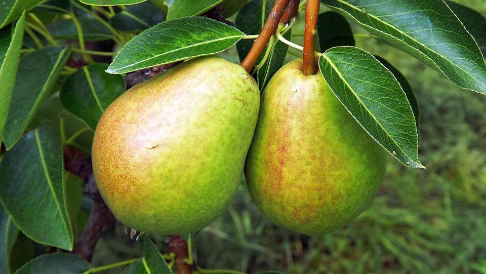 Fruit, Pears, Sad, Whole Fruit, Lean, Closeup