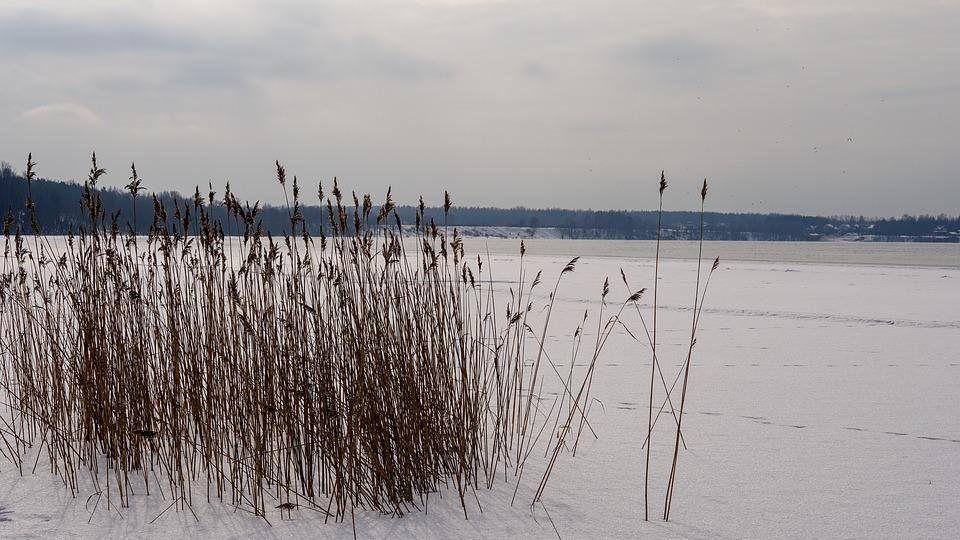 Nature, Water, Winter, Cane, Outdoors, Snow, Leann
