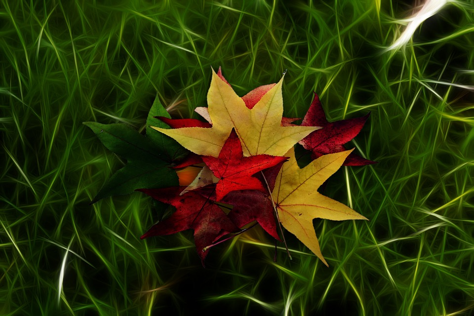 Meadow, Abstract, Nature, Grass, Autumn, Leaves