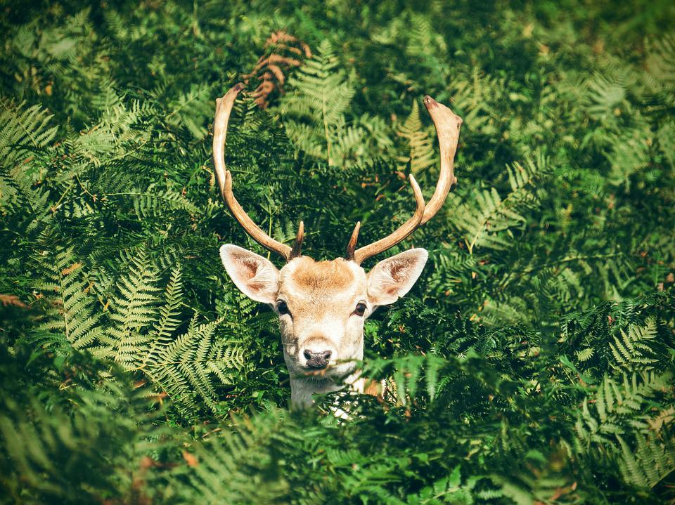 Animal, Antlers, Cute, Deer, Leaves, Outdoors, Plants
