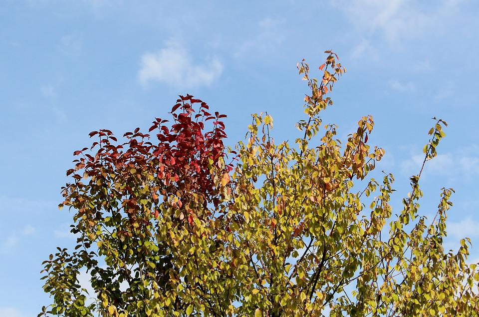 Autumn, Autumn Beginning, Tree, Crown, Leaves, Color