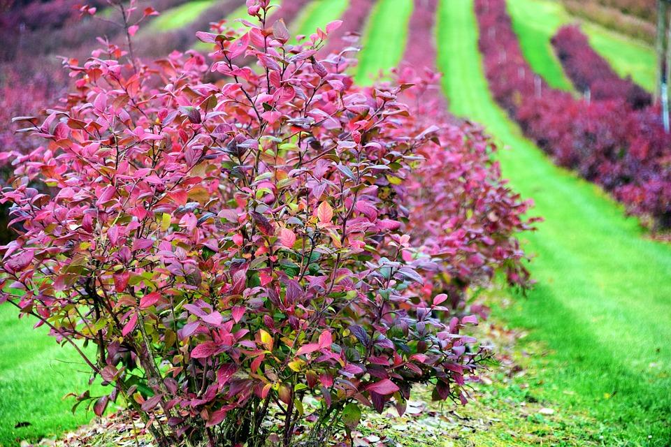 Autumn, Color, Colors Of Autumn, Nature, Leaves