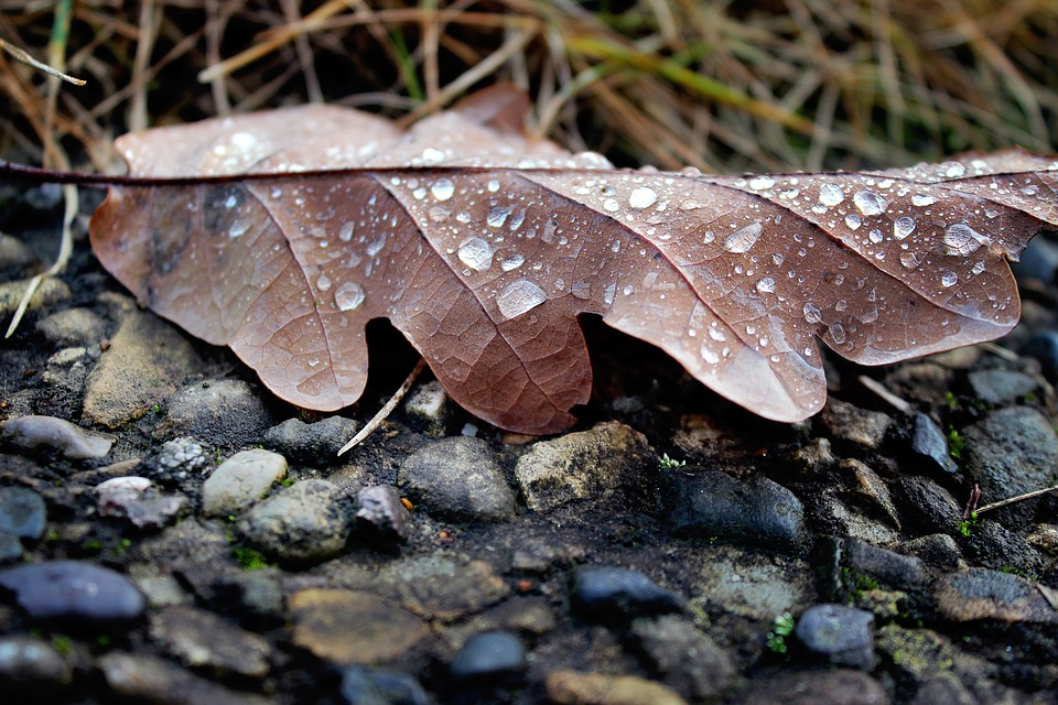 Leaf, Autumn, Drip, Brown, Stones, Leaves, Nature